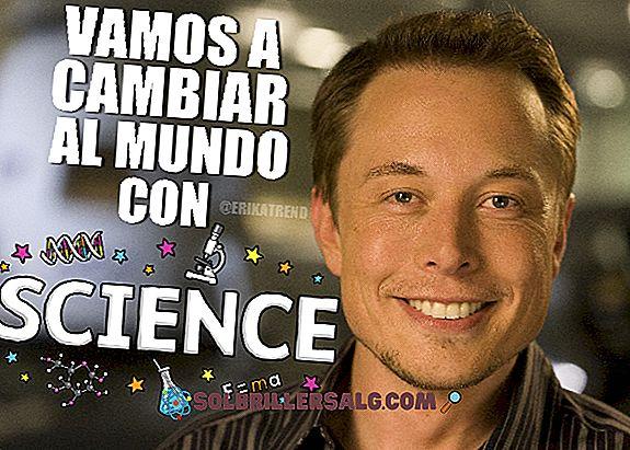 Biografie von Elon Musk, dem Mann, der die Welt verändert